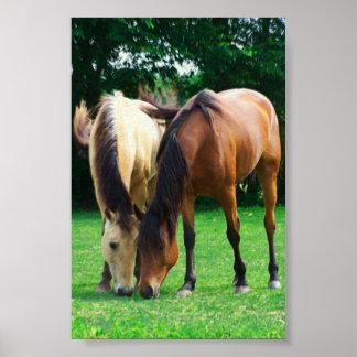 Affiche d'amour de poney