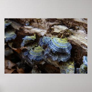 Affiche de champignon de queue de la Turquie Poster