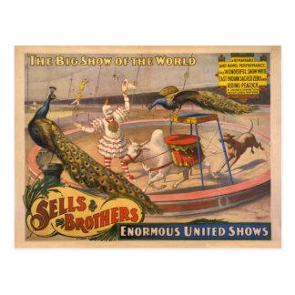 Affiche de cirque de clown, de zébu et de paon carte postale