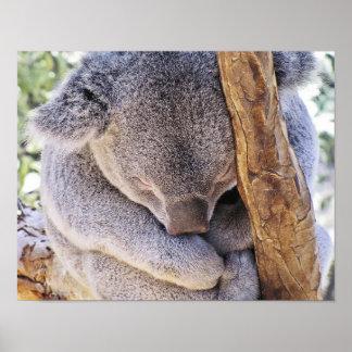 Affiche de koala