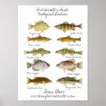 Affiche de poisson d'eau douce