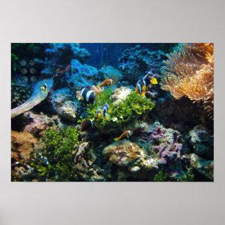 Affiche de récif coralien poster