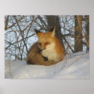 Affiche de repos de Fox Posters