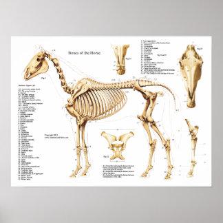 Affiche de squelette d'anatomie de cheval poster