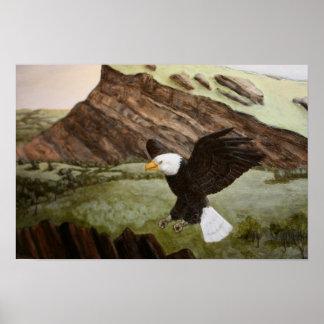 Affiche d'Eagle chauve Posters