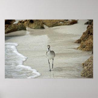 Affiche d'oiseau de rivage
