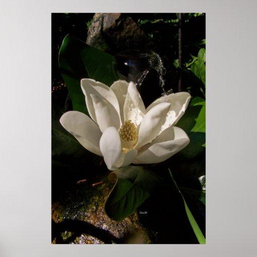Affiche douce de fleur de magnolia