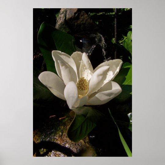 Affiche douce de fleur de magnolia posters