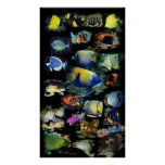 Affiche finale de poissons de récif