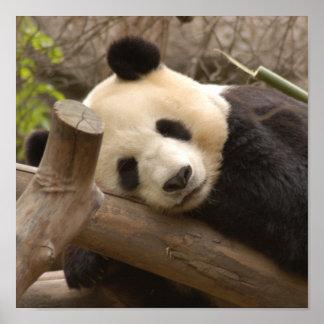 Affiche géante de panda d'ours panda et de bébé