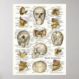 Affiche humaine 18 x 24 d'anatomie de crâne poster