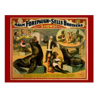 Affiche instruite de cirque d'otaries et de joints carte postale