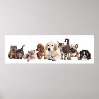 Affiche mignonne de panorama d'animal familier