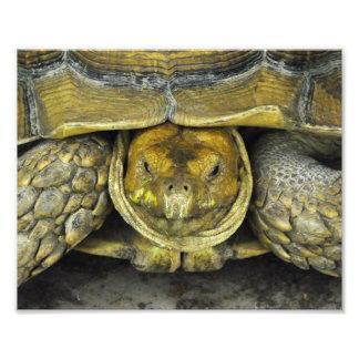 Affiche mignonne de tortue bonjour tirages photo