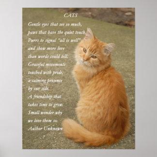 Affiche orange mignonne de chat de Kitty de Posters