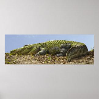 Affiche panoramique d'alligator très grand