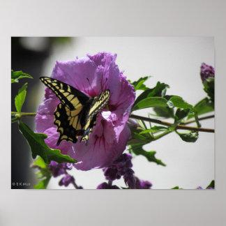 Affiche - papillon de machaon