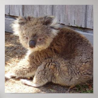 Affiche sauvage d'atterrisseur du koala 2