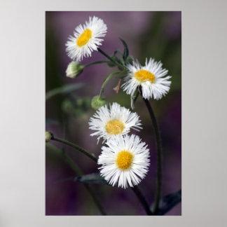 Affiche sensible de fleurs sauvages de ressort
