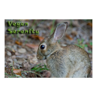 Affiche végétalienne de lapin de sérénité