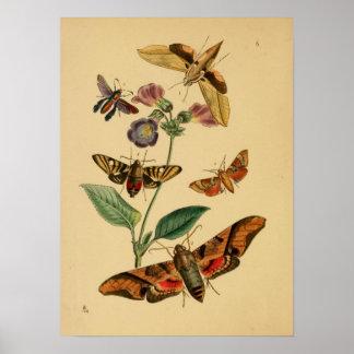 Affiche vintage de papillon posters