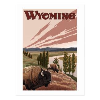 Affiche vintage de voyage de bison de la rivière carte postale