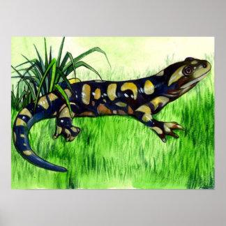Affiches d'amant de salamandre