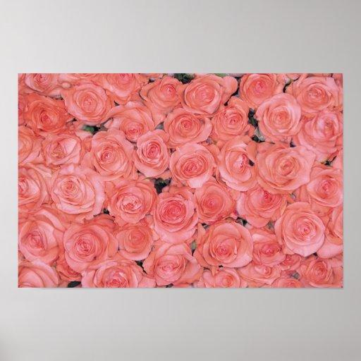 Affiches et copies assez roses de roses