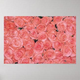Affiches et copies assez roses de roses posters