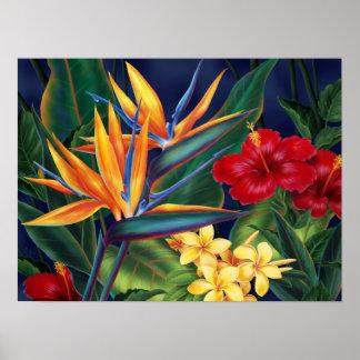 Affiches tropicales de paradis