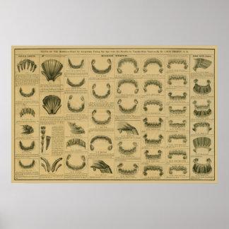 Âge de cheval par l'affiche dentaire d'anatomie de poster