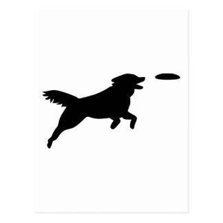 Agilité de chien cartes postales