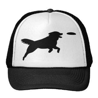 Agilité de chien casquette