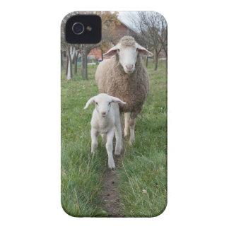 Agneau et moutons coques iPhone 4 Case-Mate