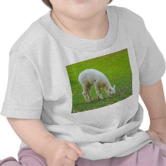 agneau t-shirt