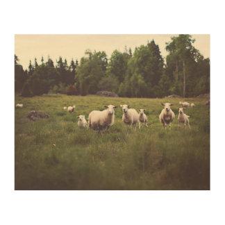 Agneaux pelucheux de moutons blancs de petit impression sur bois