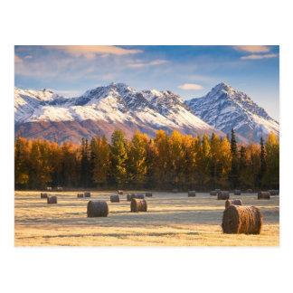 Agriculture de l'Alaska Carte Postale