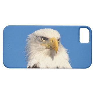 aigle chauve, leuccocephalus de Haliaeetus, 2 Étuis iPhone 5