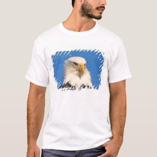 aigle chauve, leuccocephalus de Haliaeetus, 2 T-shirt