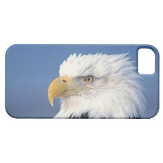 aigle chauve, leuccocephalus de Haliaeetus, Coques iPhone 5