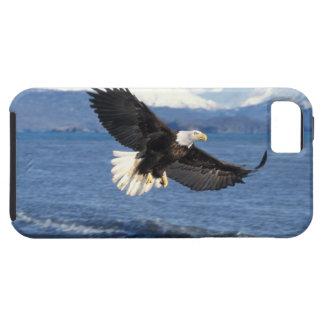 aigle chauve, leuccocephalus de Haliaeetus, en vol Coques Case-Mate iPhone 5