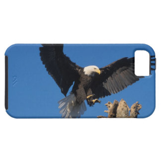 aigle chauve, leuccocephalus de Haliaeetus, iPhone 5 Case