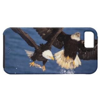 aigle chauve, leucocephalus de Haliaeetus, Coque iPhone 5 Case-Mate