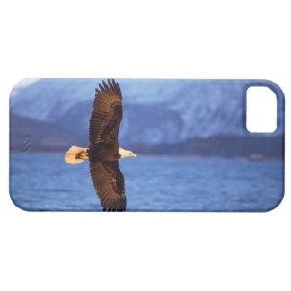 aigle chauve, leucocephalus de Haliaeetus, en vol Coque Barely There iPhone 5