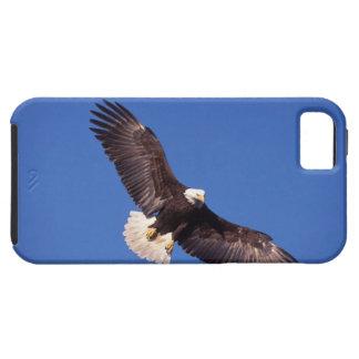 aigle chauve, leucocephalus de Haliaeetus, en vol Coques iPhone 5 Case-Mate