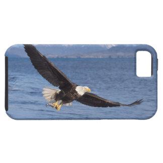 aigle chauve, leucocephalus de Haliaeetus, en vol Étui iPhone 5