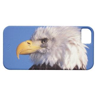 aigle chauve, leucocephalus de Haliaeetus, fin, 2 Étui iPhone 5