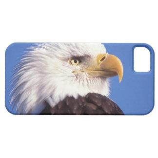 aigle chauve, leucocephalus de Haliaeetus, fin, 3 Étuis iPhone 5