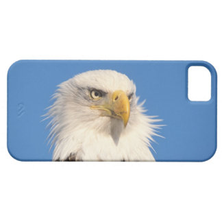 aigle chauve, leucocephalus de Haliaeetus, fin, Coque Case-Mate iPhone 5