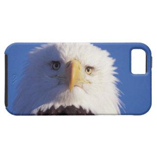 aigle chauve, leucocephalus de Haliaeetus, tir Coque Case-Mate iPhone 5